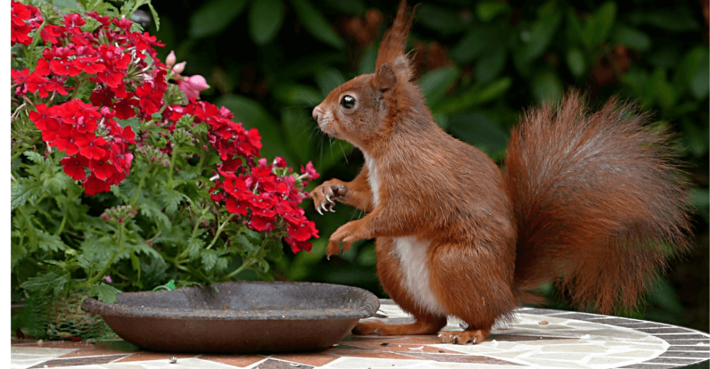 On The Fly Pest Solutions | Squirrel Prevention