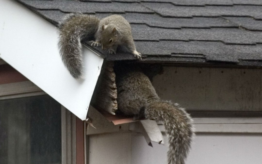 How to Choose a Wildlife Control Services?