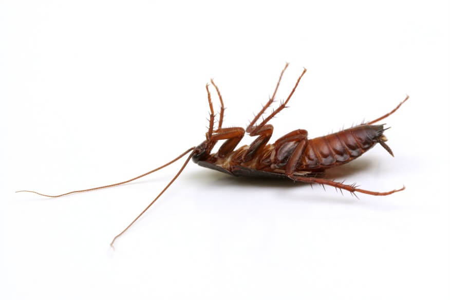 Bed Bugs And Other Pests