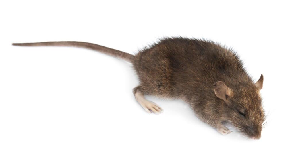 Columbia Mice Control
