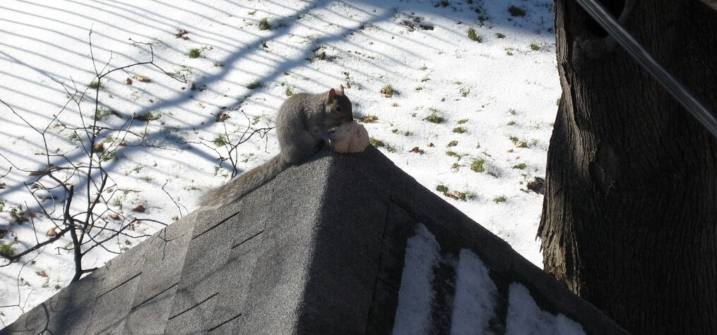 Image of a squirrel breaking into a house during the winter